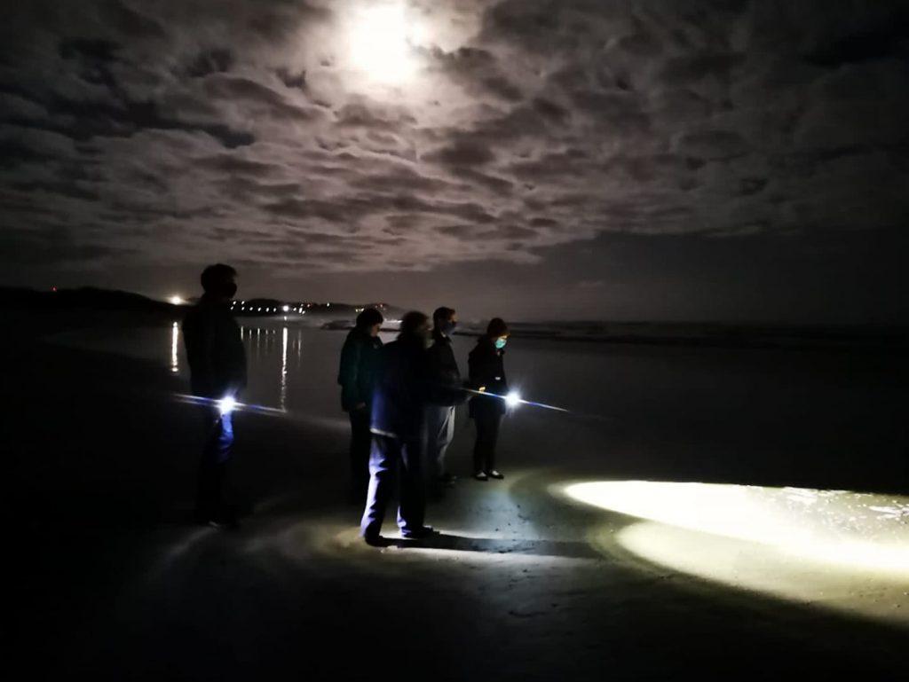 moonlight-meander